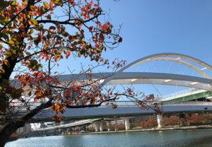大川の紅葉