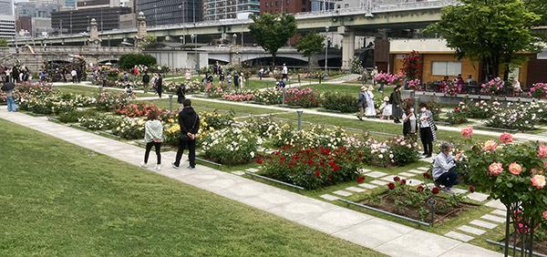 中之島公園 薔薇園